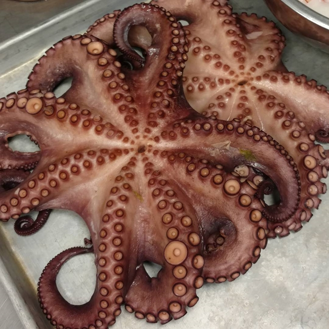 octopus at the cocoa lab